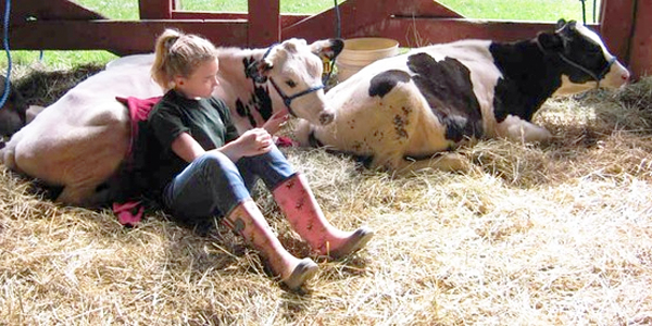 Exhibitor with cows at 4-H Fair (Photo: Cornell University)