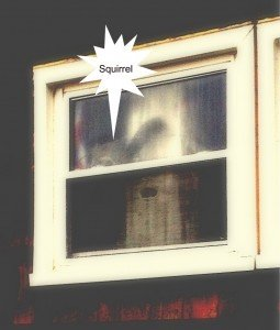 Squirrel in the Window