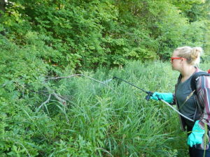 Lucy Nuessle, Project Manager, spraying reed canarygrass along the tree line at Niagara Escarpment Preserve in 2015. Photo Credit: WNY PRISM.
