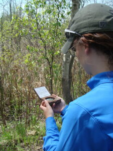 Great Lakes Slender False Brome 2018 Survey and Monitoring Intern, Rachel Bonafilia, is collecting canopy cover data as part of survey protocol. Photo Credit: WNY PRISM