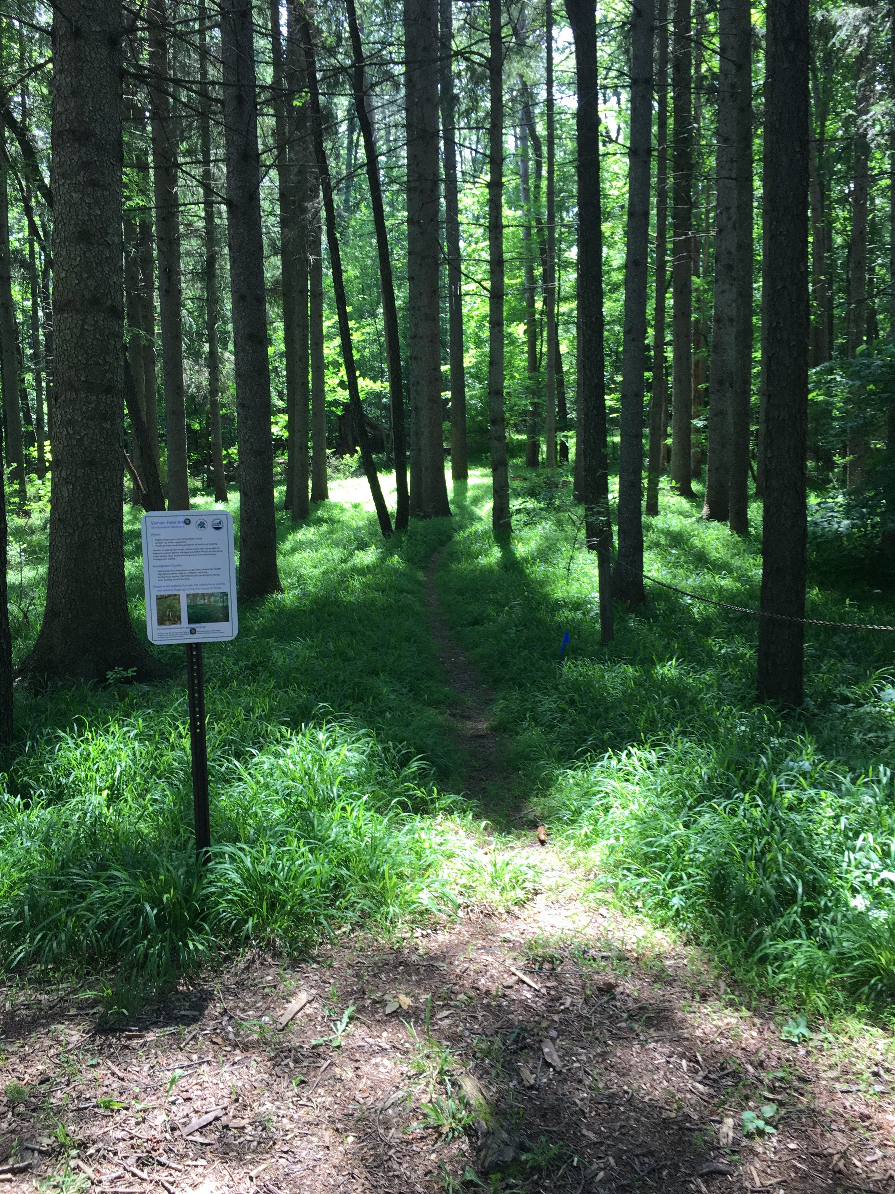 Genesee County Park and Forest Pre-Treatment, 2018