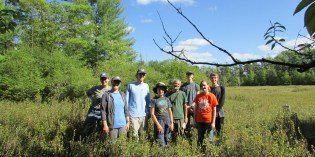 2019 Field Notes: Glossy Buckthorn at Houghton Preserve
