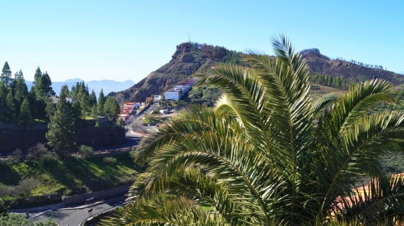 Typische Palmenvegetation in Artenara