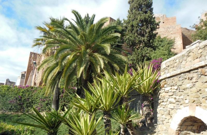 Wintergrün in Malaga