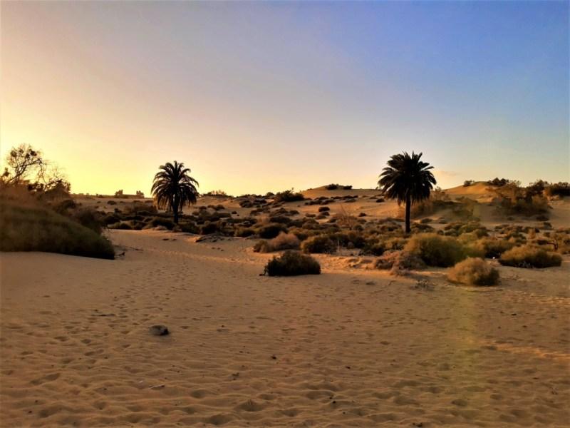 So sieht es aus, wenn die Sonne in den Dünen von Maspalomas untergeht