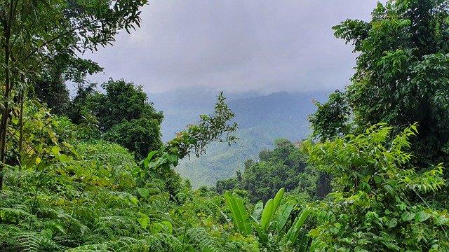 Tropischer Regenwald in Lateinamerika