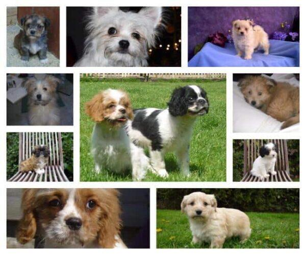 Boomer pups