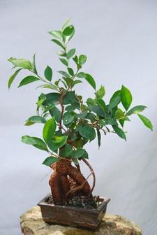 Zimmerpflanzen nach Feng Shui  Wohnende Ratgeber