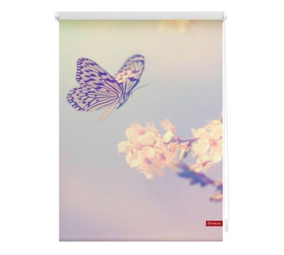 Rollo Seitenzugrollo Schmetterlingonline kaufen