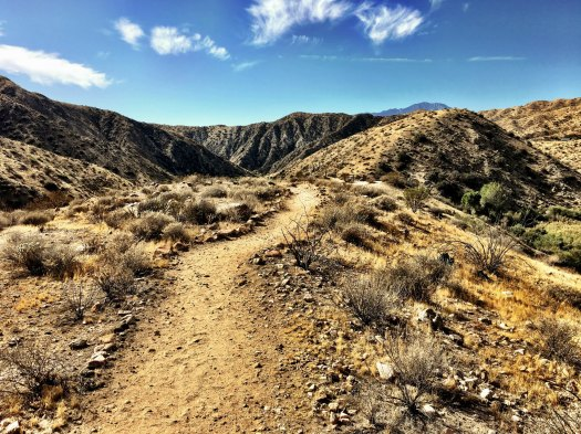 big-morongo-canyon-6