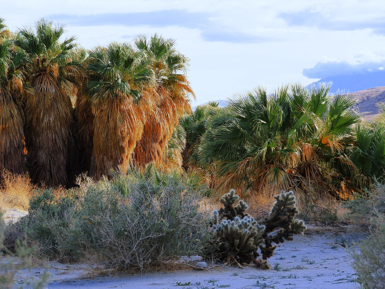 Thousand  Palms Oasis Preserve – Naturschutzgebiet