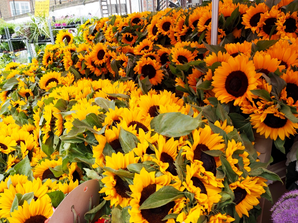 Columbia Road tiny trail_Sunflowers