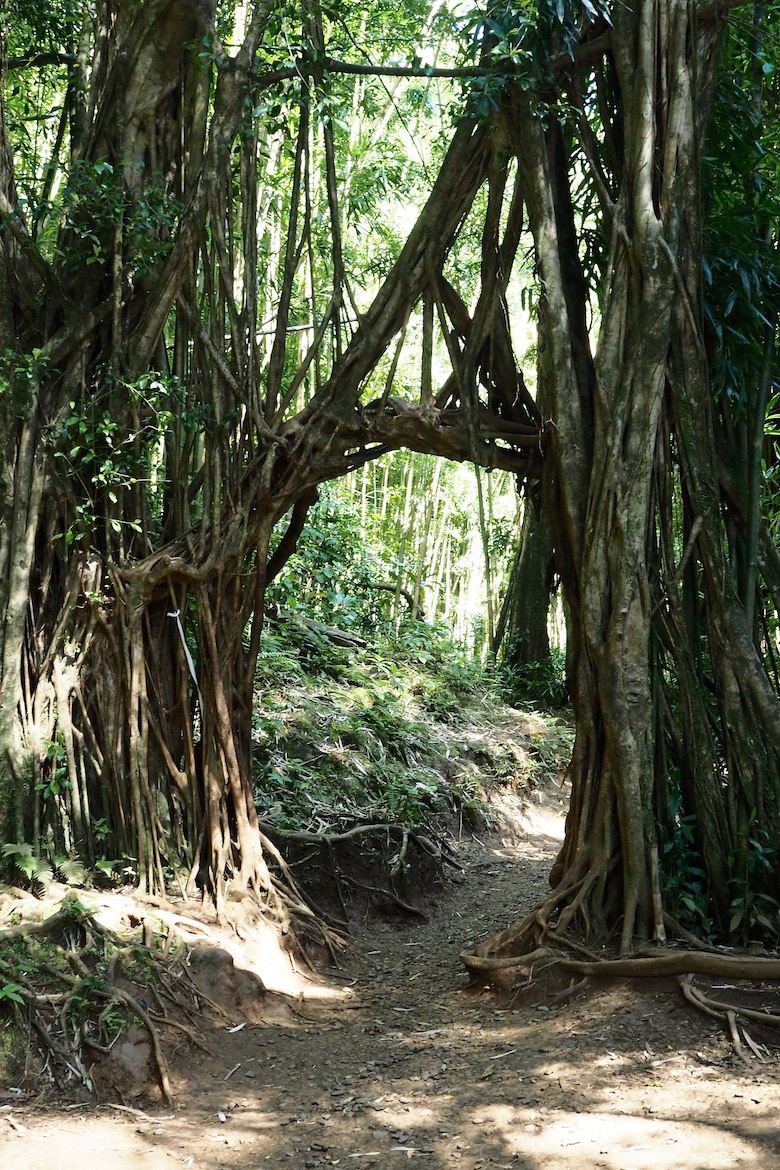 10 Things to do in Oahu, Hawaii   Wolf & Stag