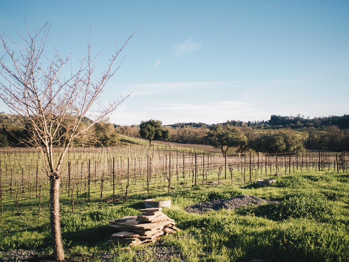 One Night in Wine Country | Enriquez Estate Winery | Wolf & Stag Adventures
