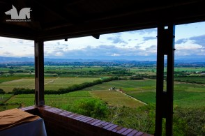 The wine lands of Colombia