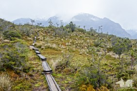 A wooden hiking trail constructed in the swampy terrain
