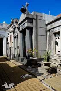 It's a cat's life at the Cemetario Recoleta.