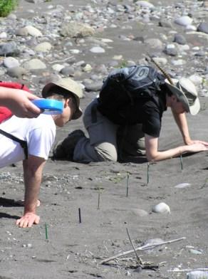 Participants marking tracks along the shore.
