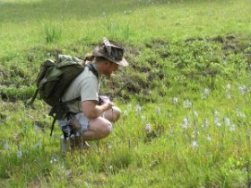 Eperienced Wolf College Instructor Confirming Blue Camus Flowers