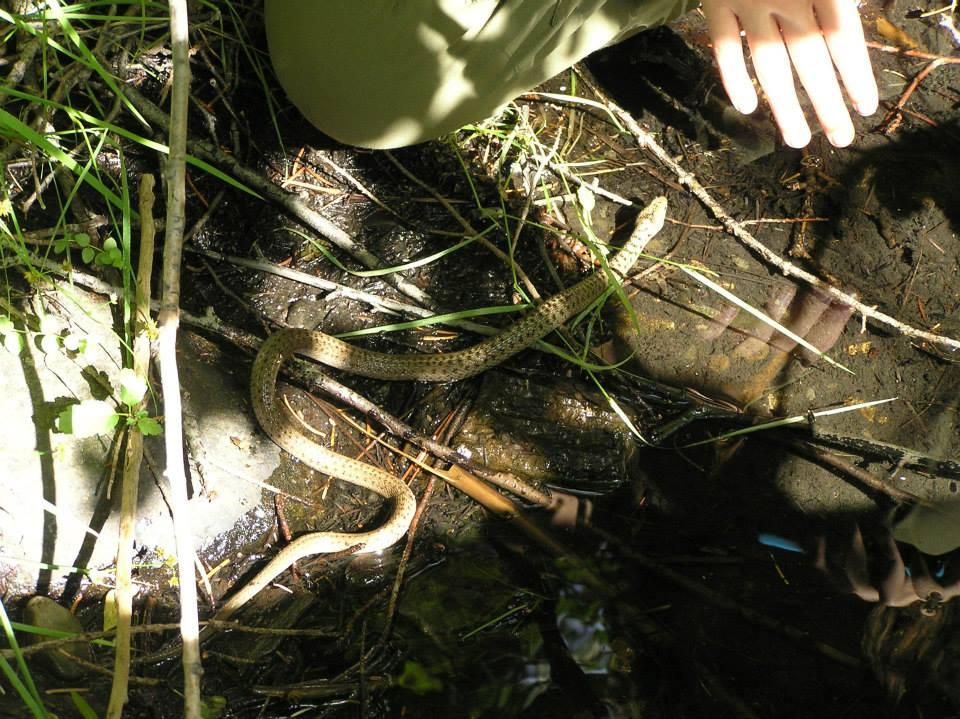 Unidentified Snake