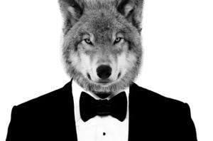 indie music-wolfinasuit-wolf in a suit-music blog-indie blog