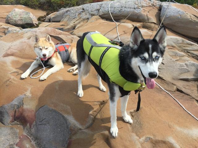 Huskies On Island
