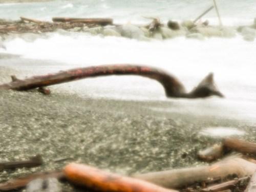 Ross Bay Driftwood - December 20, 2010