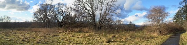 Garry Oak 1