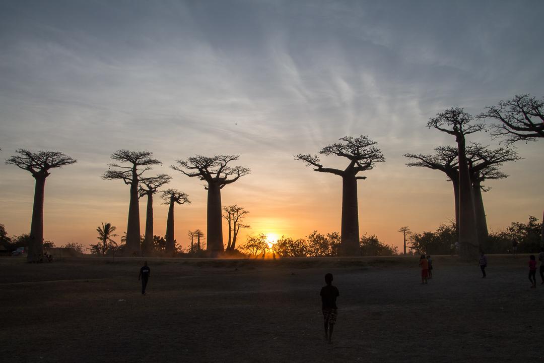 Madagascar allée des baobabs au coucher du soleil
