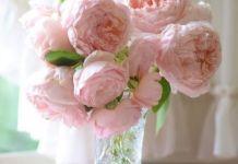 Пионовидная роза – 5 фактов об этом удивительном цветке