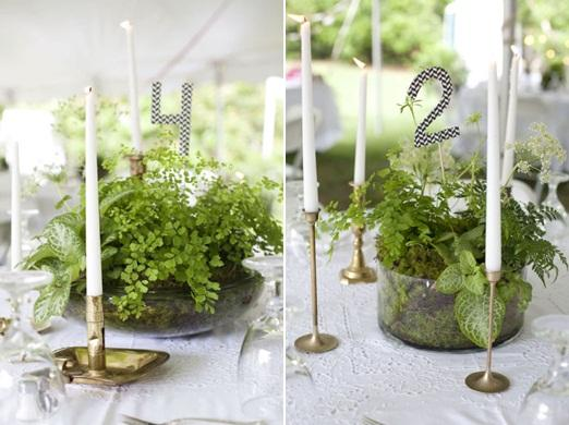 Wedding Table Decorations Potted Plants  Woman Getting Married