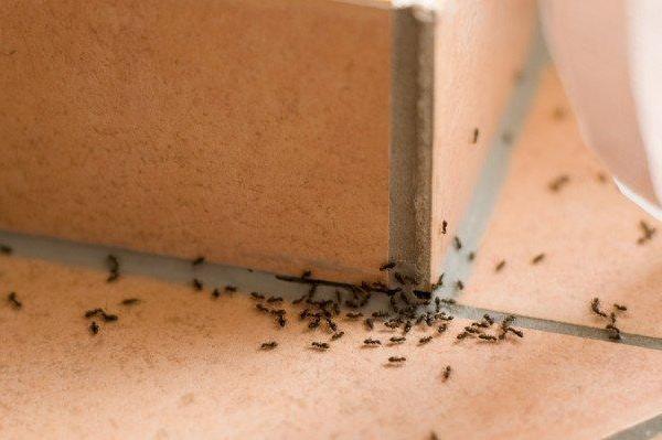 Εξαφάνισε τα μυρμήγκια από το σπίτι