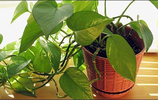 Τα καλύτερα Φυτά Εσωτερικού Χώρου