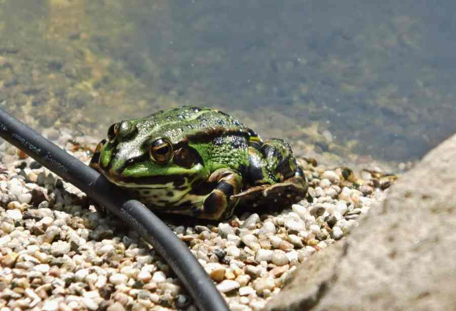 toad-174815_1280