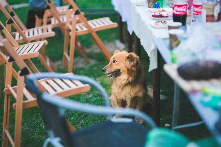 garden-party-animal-dog