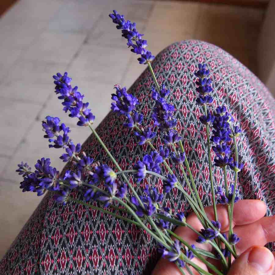 lavender-746082_1280