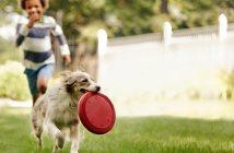 אימוץ כלבים והוצאתם לחופשי