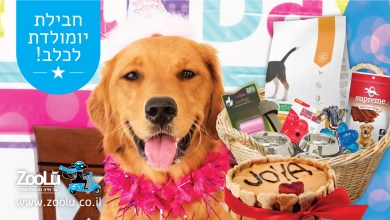 Photo of חבילות יום הולדת מפנקות ל…כלבים שלך!