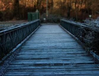Bridging What Divides