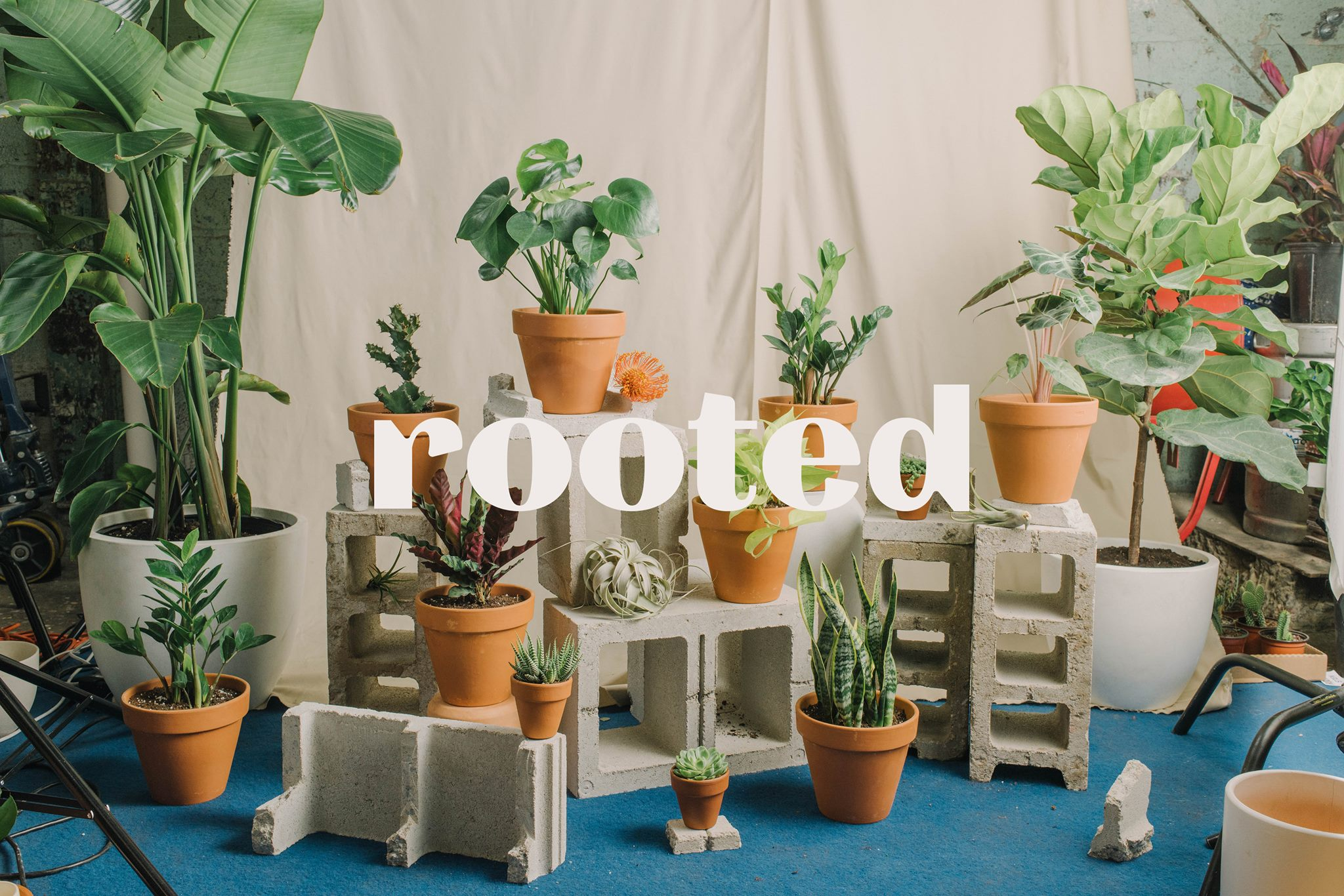 Rooted – NYC home and garden flower store