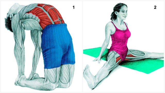 The-Art-of-Stretching-1