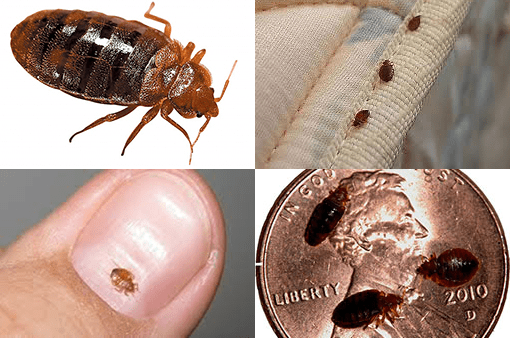 The Effective Ways To Protect Your Mattress From Bed Bugs