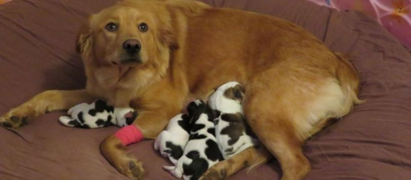 Proud Mother Dog Gets Confused When She Gives Birth to