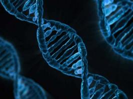 Study reveals new genetic mechanism driving breast cancer, is breast cancer hereditary on father's side, breast cancer genes list, brca gene inheritance, brca gene test cost, how does a woman's weight influence her breast cancer risk, breast cancer genes beyond brca1 and brca2, approximately what percent of all breast cancers are hereditary, brca2 gene positive,