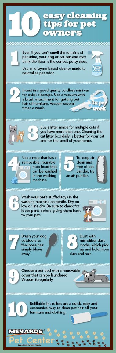 10 Tips to Keep Your House Clean While Having a Dog ...