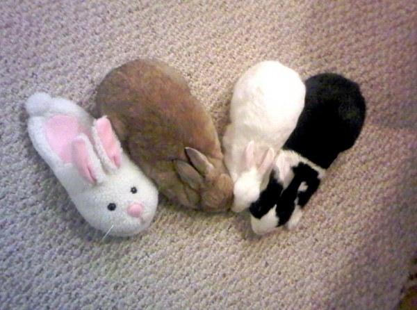 fake bunny