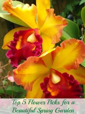 Orchid flower garden shot