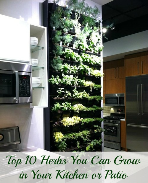 Filled kitchen herb holder