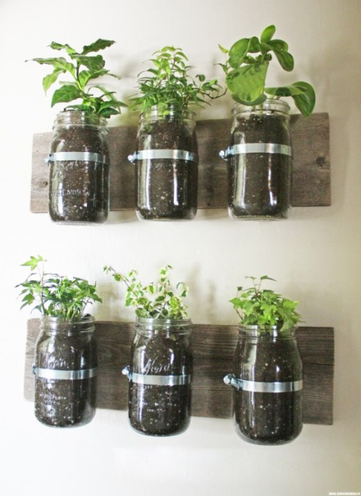 herbs and plants in mason jars