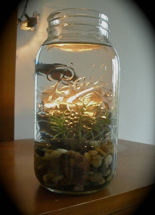 DIY mason jar aquarium